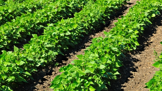 FJ Pulse: 42% of Farmers Can Plant Their Fields in Under 10 Days