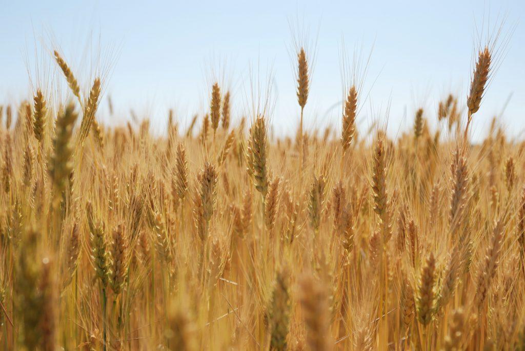 Crop Progress: Corn, Soybeans Continue To Struggle